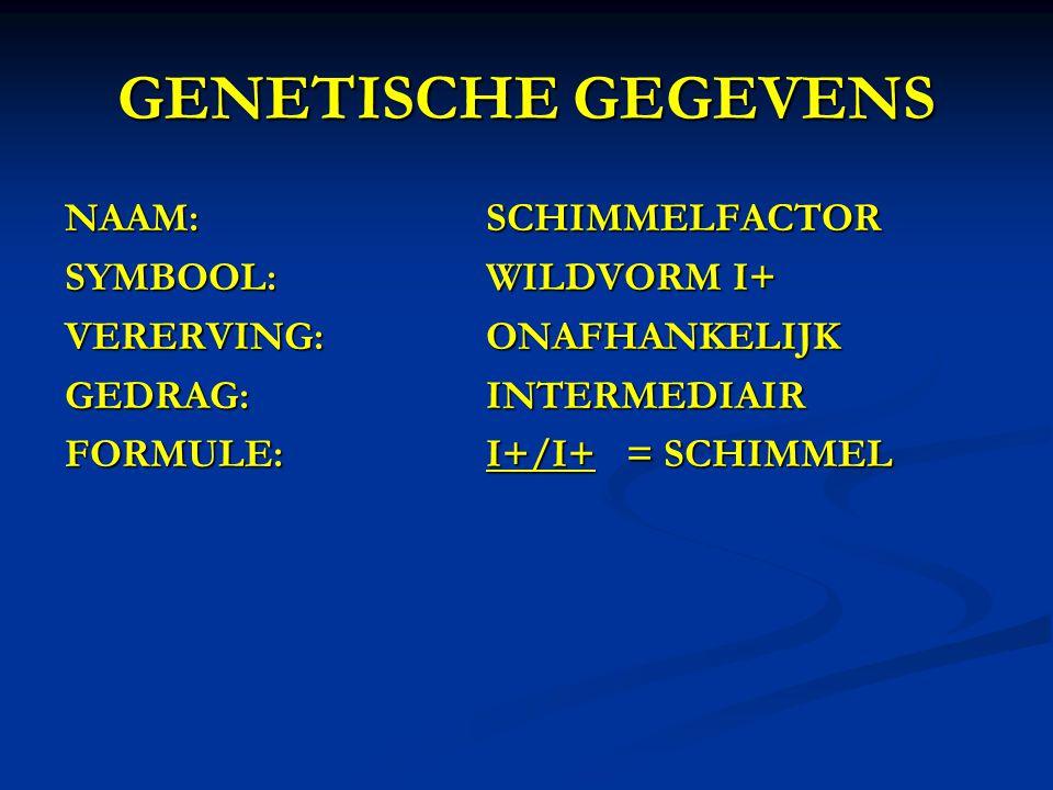GENETISCHE GEGEVENS NAAM:SCHIMMELFACTOR SYMBOOL:WILDVORM I+ VERERVING:ONAFHANKELIJK GEDRAG:INTERMEDIAIR FORMULE:I+/I+ = SCHIMMEL