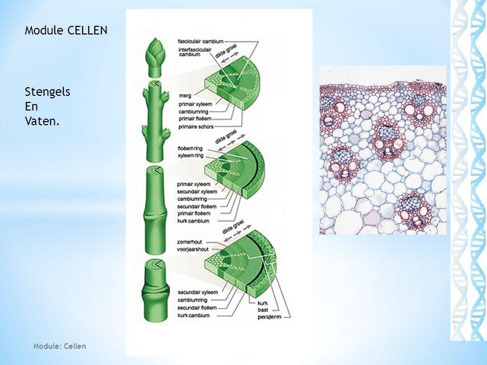 Module: Cellen 15 Module CELLEN Stengels En Vaten.