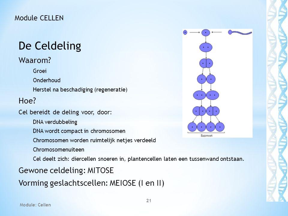 De Celdeling Waarom? Groei Onderhoud Herstel na beschadiging (regeneratie) Hoe? Cel bereidt de deling voor, door: DNA verdubbeling DNA wordt compact i