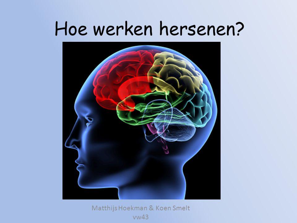 Hoe werken hersenen? Matthijs Hoekman & Koen Smelt vw43