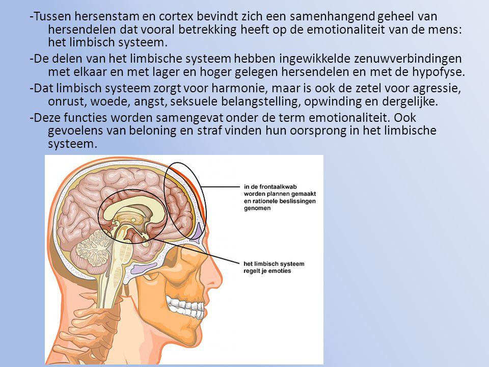 -Tussen hersenstam en cortex bevindt zich een samenhangend geheel van hersendelen dat vooral betrekking heeft op de emotionaliteit van de mens: het li