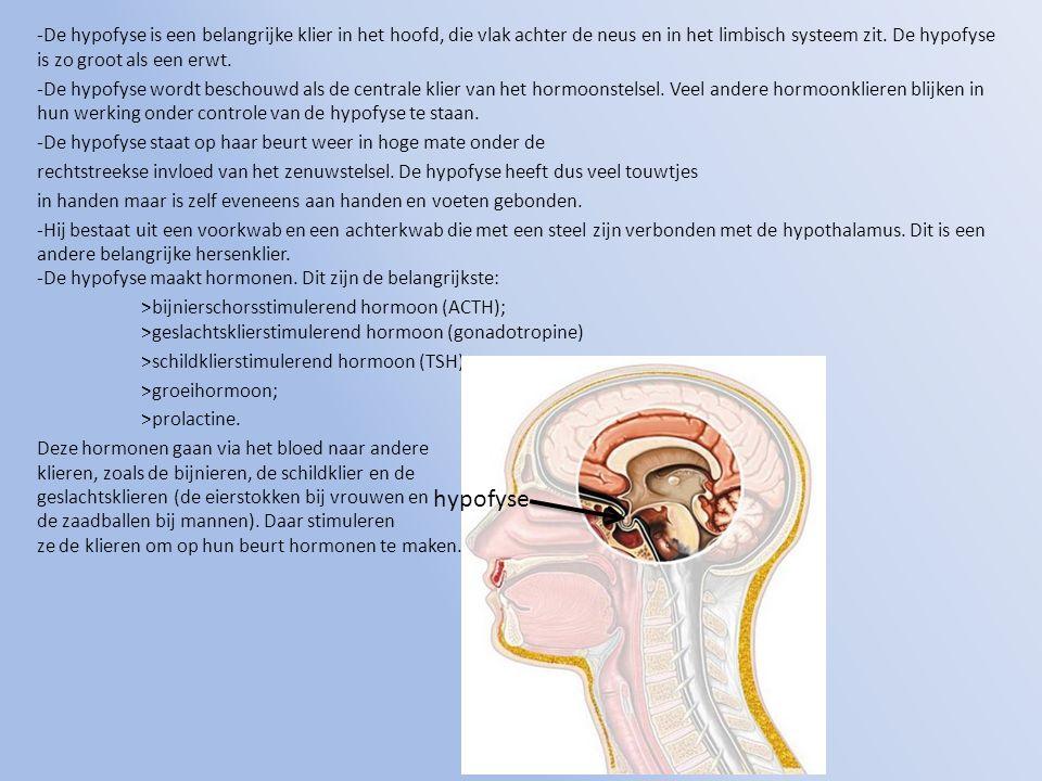 -De hypofyse is een belangrijke klier in het hoofd, die vlak achter de neus en in het limbisch systeem zit. De hypofyse is zo groot als een erwt. -De