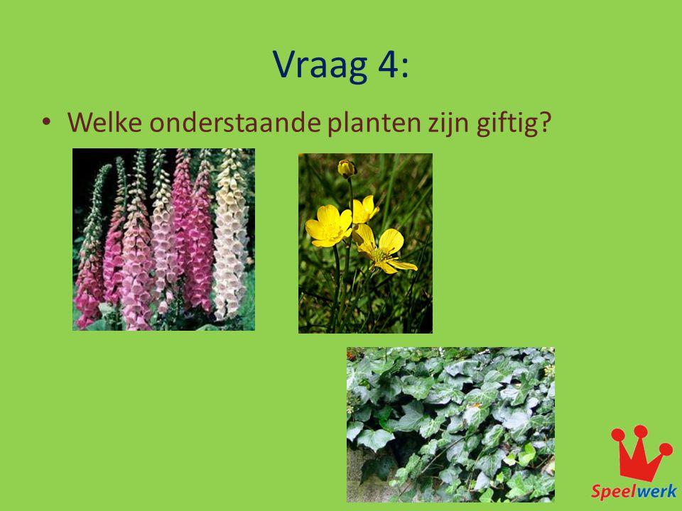 Vraag 4: • Welke onderstaande planten zijn giftig?