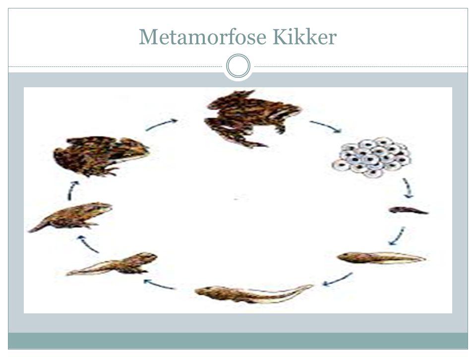 Metamorfose Kikker