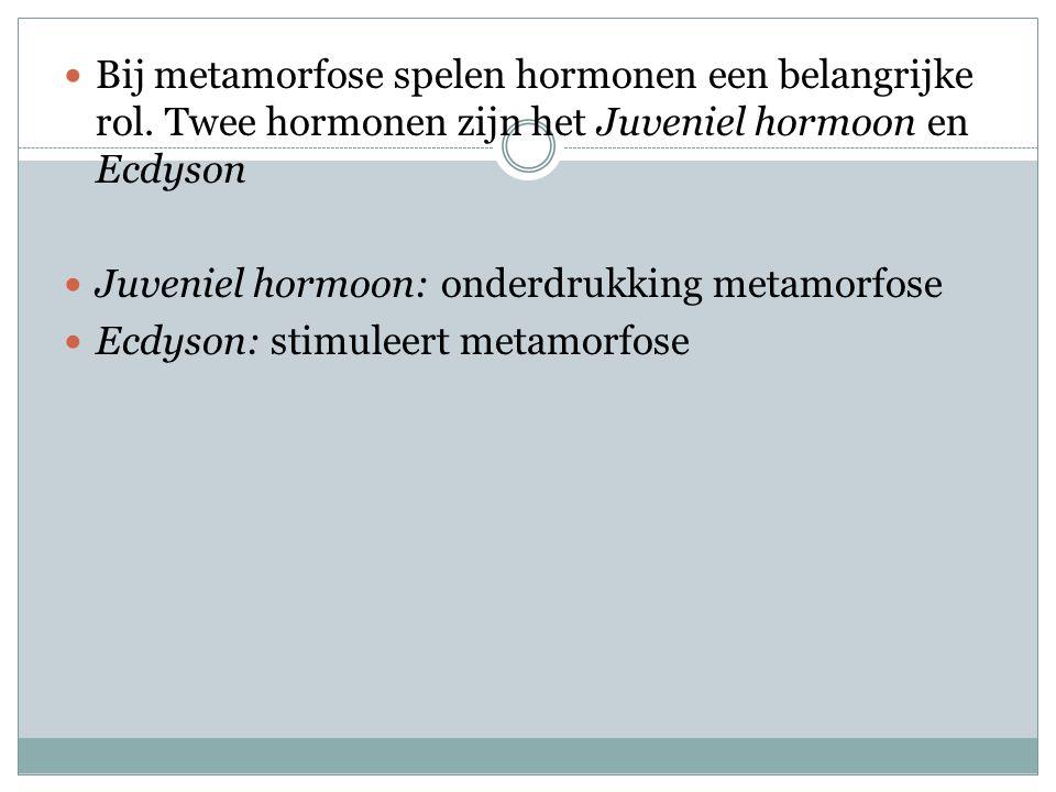  Bij metamorfose spelen hormonen een belangrijke rol. Twee hormonen zijn het Juveniel hormoon en Ecdyson  Juveniel hormoon: onderdrukking metamorfos