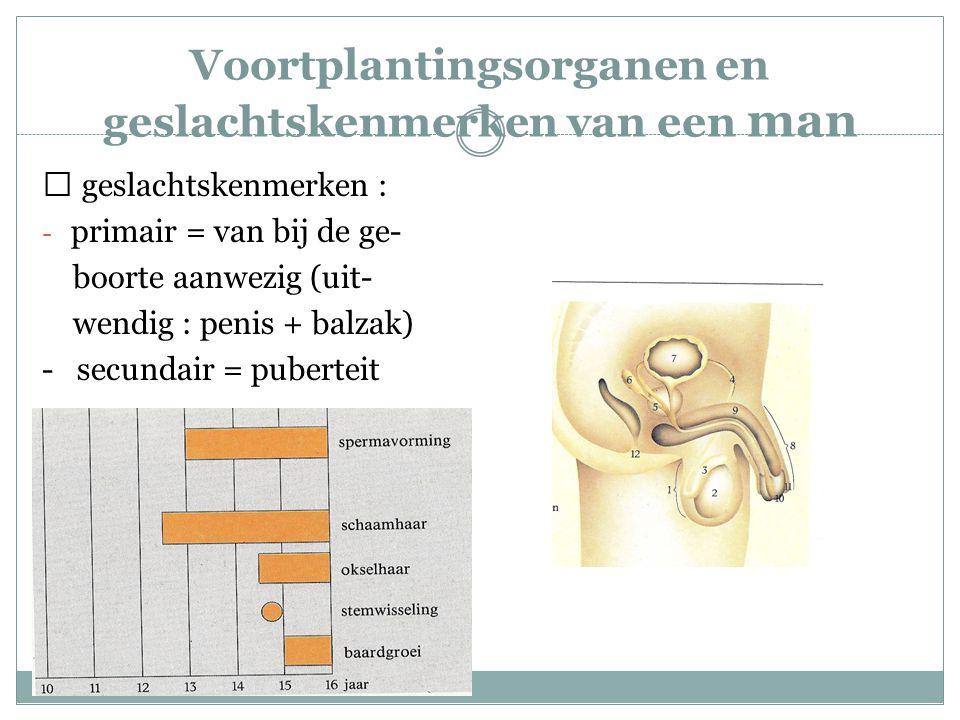 Voortplantingsorganen en geslachtskenmerken van een man  geslachtskenmerken : - primair = van bij de ge- boorte aanwezig (uit- wendig : penis + balza
