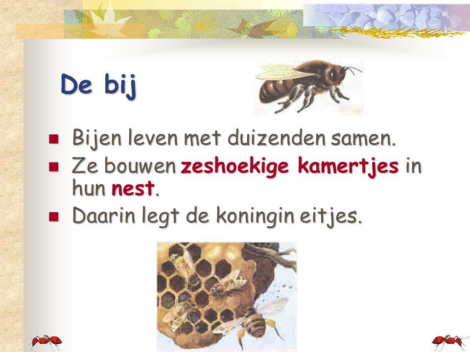 De bij  Bijen leven met duizenden samen. Ze bouwen zeshoekige kamertjes in hun nest.