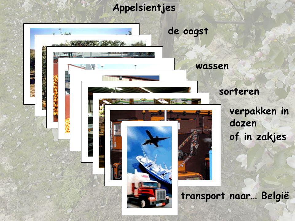de oogstwassen sorteren verpakken in dozen Appelsientjes of in zakjes transport naar… België