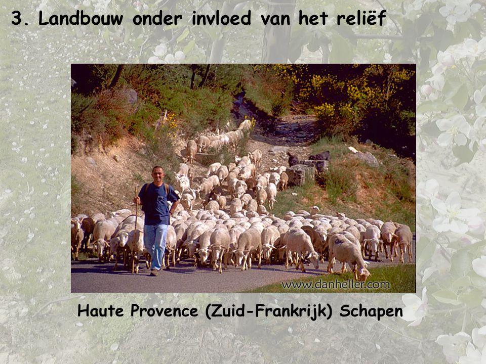 3. Landbouw onder invloed van het reliëf Haute Provence (Zuid-Frankrijk) Schapen