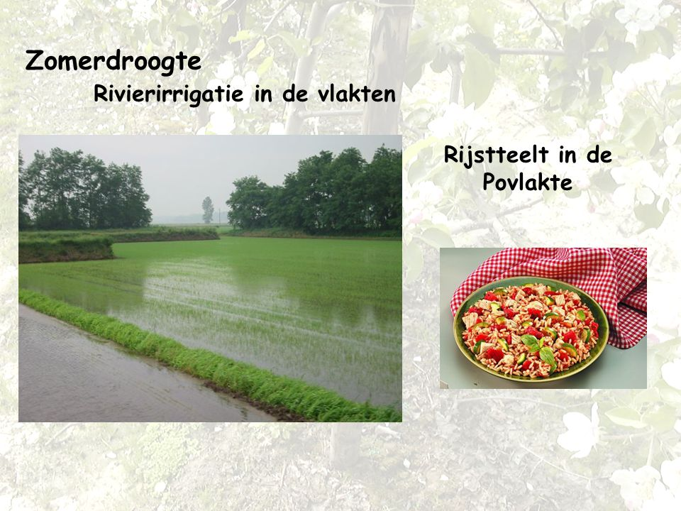 Zomerdroogte Rivierirrigatie in de vlakten Rijstteelt in de Povlakte