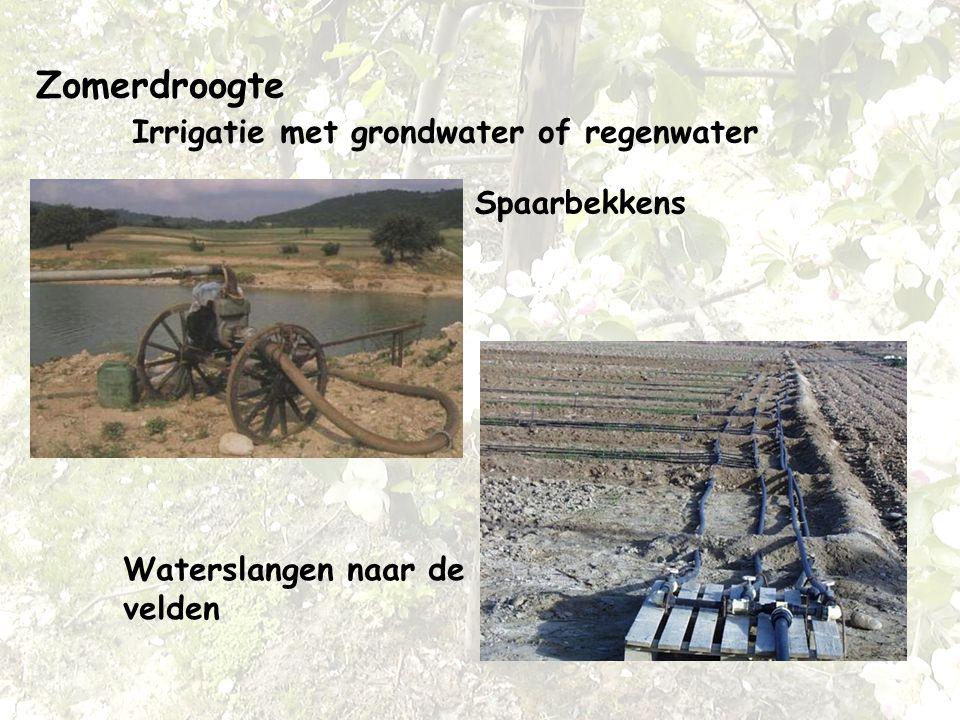 Zomerdroogte Irrigatie met grondwater of regenwater Spaarbekkens Waterslangen naar de velden