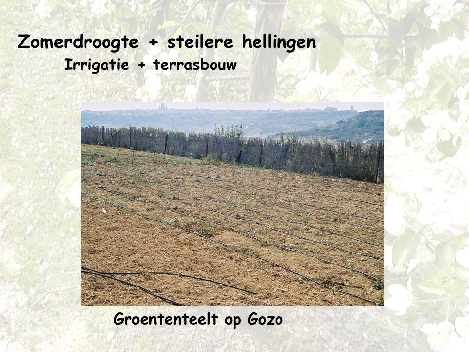 Zomerdroogte + steilere hellingen Irrigatie + terrasbouw Groententeelt op Gozo