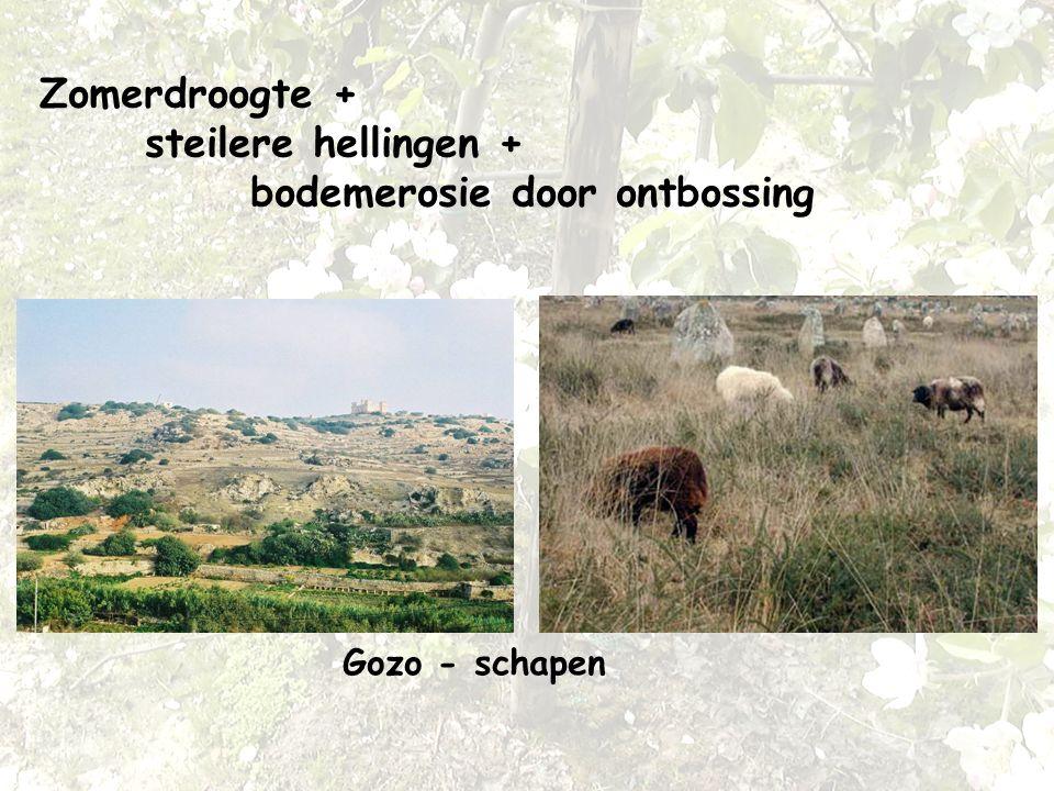 Zomerdroogte + steilere hellingen + bodemerosie door ontbossing Gozo - schapen
