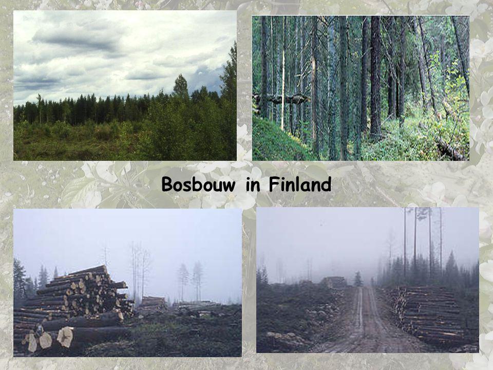 Bosbouw in Finland