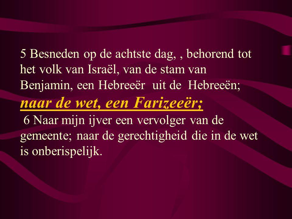 5 Besneden op de achtste dag,, behorend tot het volk van Israël, van de stam van Benjamin, een Hebreeër uit de Hebreeën; naar de wet, een Farizeeër; 6