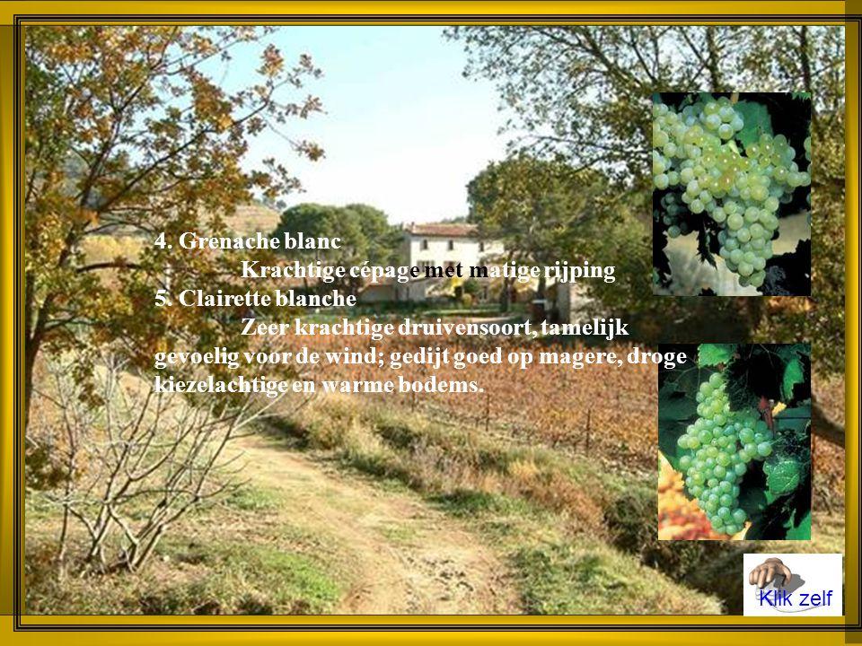 Enkele belangrijke druivenrassen in Côtes du Rhône 1.