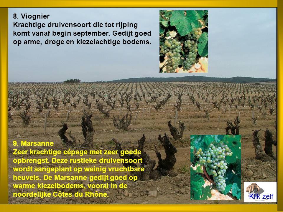 6.Roussanne Matig krachtige druivensoort die tot rijping komt in september.