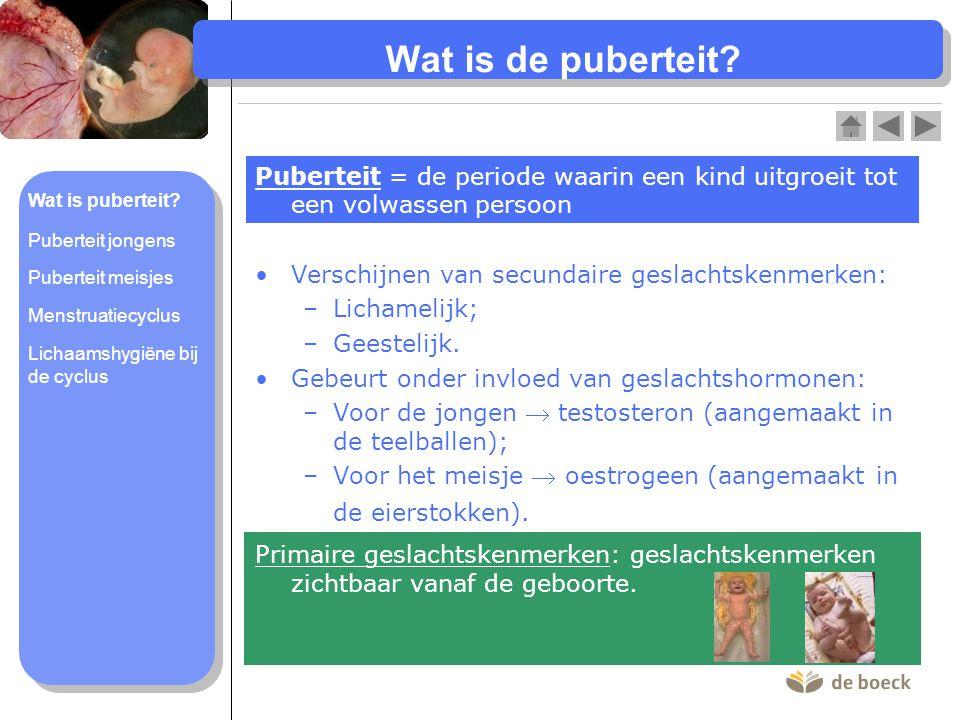 Wat is de puberteit? •Verschijnen van secundaire geslachtskenmerken: –Lichamelijk; –Geestelijk. •Gebeurt onder invloed van geslachtshormonen: –Voor de