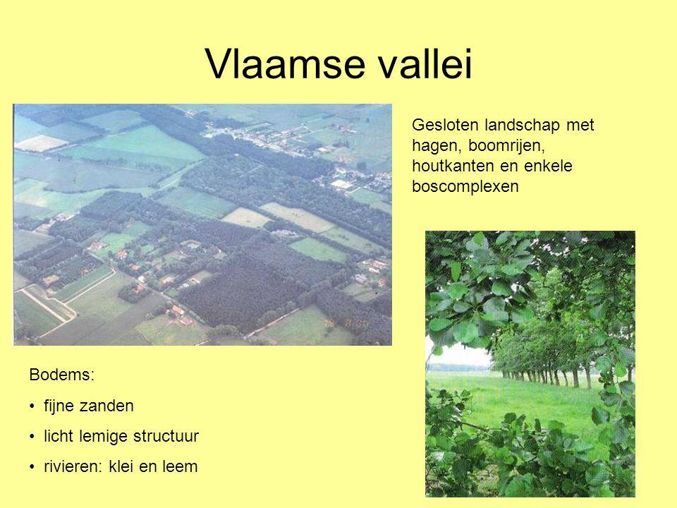 Vlaamse vallei Bodems: • fijne zanden • licht lemige structuur • rivieren: klei en leem Gesloten landschap met hagen, boomrijen, houtkanten en enkele