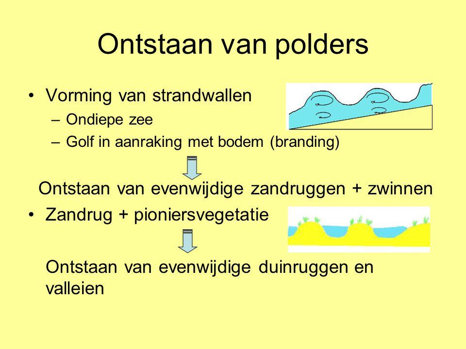 Ontstaan van polders •Vorming van strandwallen –Ondiepe zee –Golf in aanraking met bodem (branding) Ontstaan van evenwijdige zandruggen + zwinnen •Zan