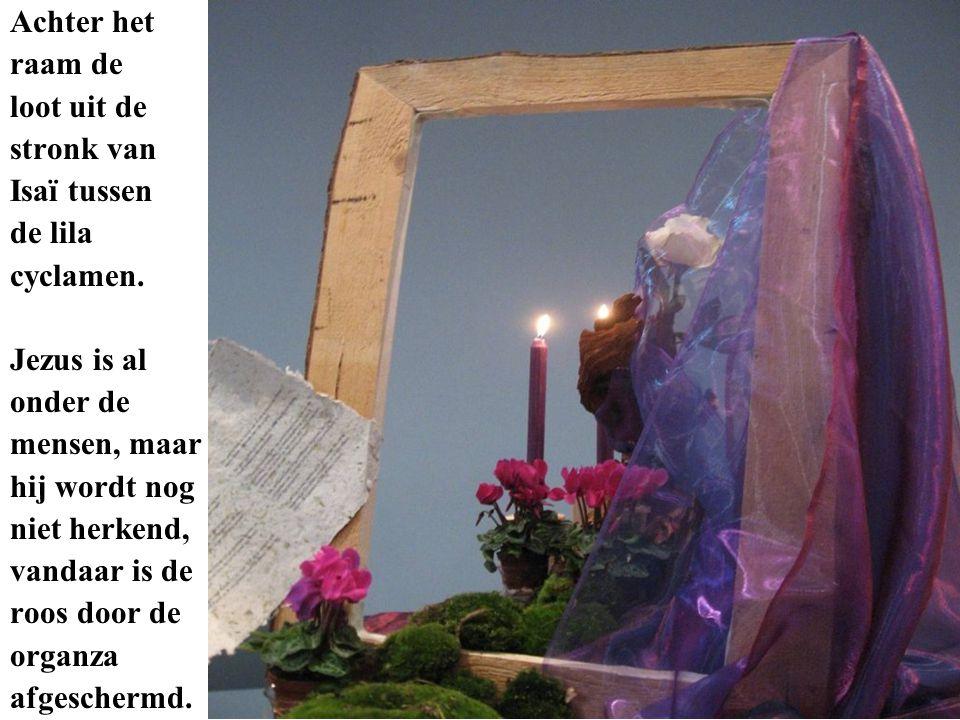 Achter het raam de loot uit de stronk van Isaï tussen de lila cyclamen.