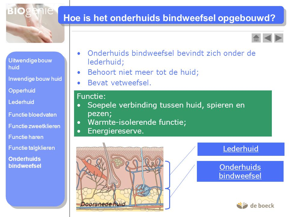 Hoe is het onderhuids bindweefsel opgebouwd? •Onderhuids bindweefsel bevindt zich onder de lederhuid; •Behoort niet meer tot de huid; •Bevat vetweefse