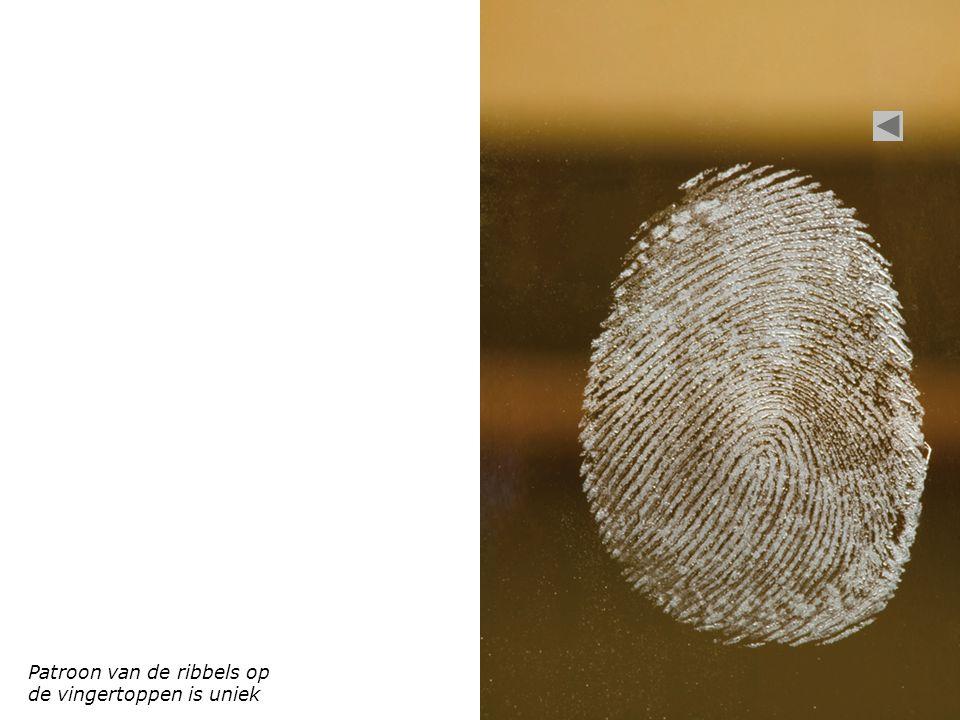 Patroon van de ribbels op de vingertoppen is uniek