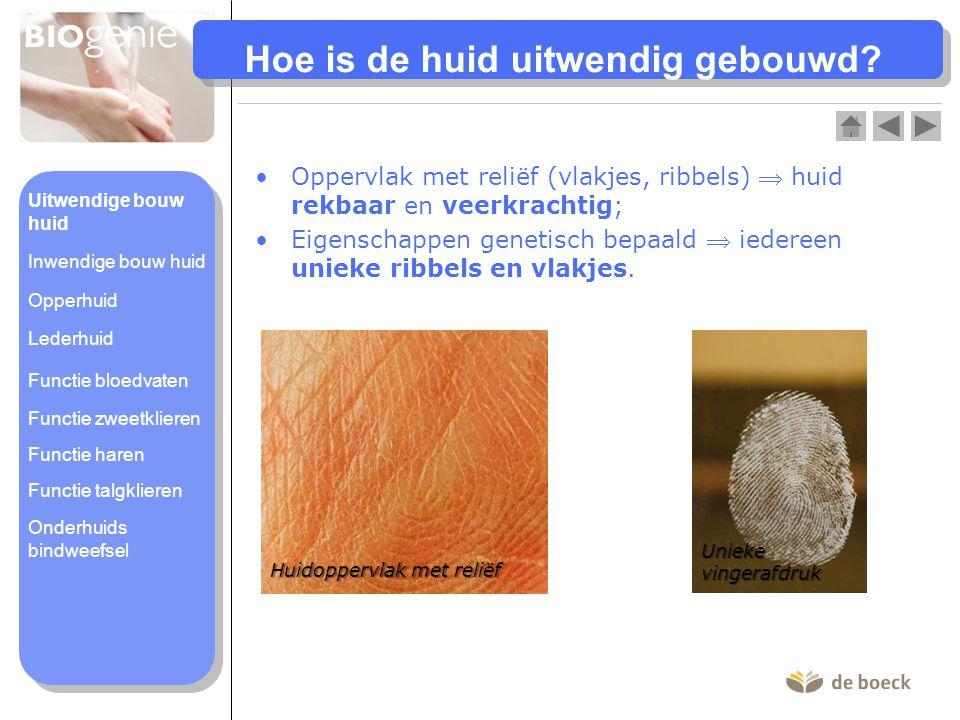 Hoe is de huid uitwendig gebouwd? •Oppervlak met reliëf (vlakjes, ribbels)  huid rekbaar en veerkrachtig; •Eigenschappen genetisch bepaald  iedereen
