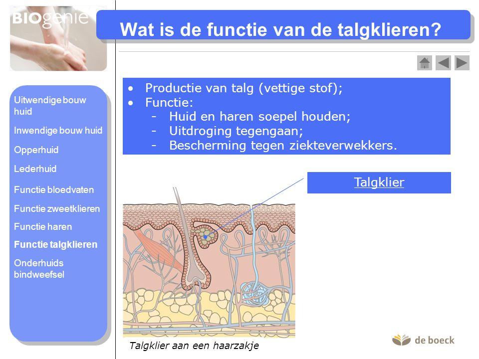 Wat is de functie van de talgklieren? •Productie van talg (vettige stof); •Functie: -Huid en haren soepel houden; -Uitdroging tegengaan; -Bescherming