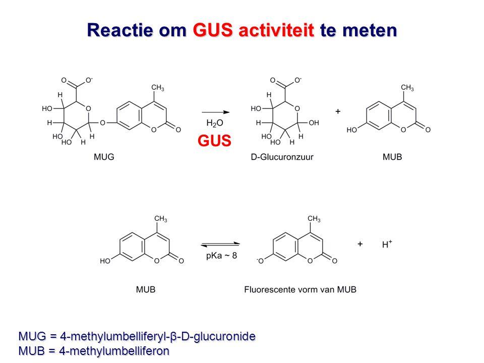 Reactie om GUS activiteit te meten MUG = 4-methylumbelliferyl-β-D-glucuronide MUB = 4-methylumbelliferon GUS