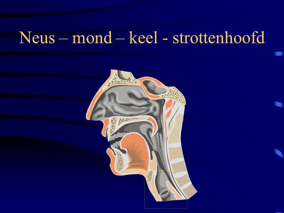 Hoe is het ademhalingsstelsel opgebouwd? •Neus – mond – keelholte •Strottenhoofd •Luchtpijp •Longblaasjes •Middenrif •Omgevende structuren