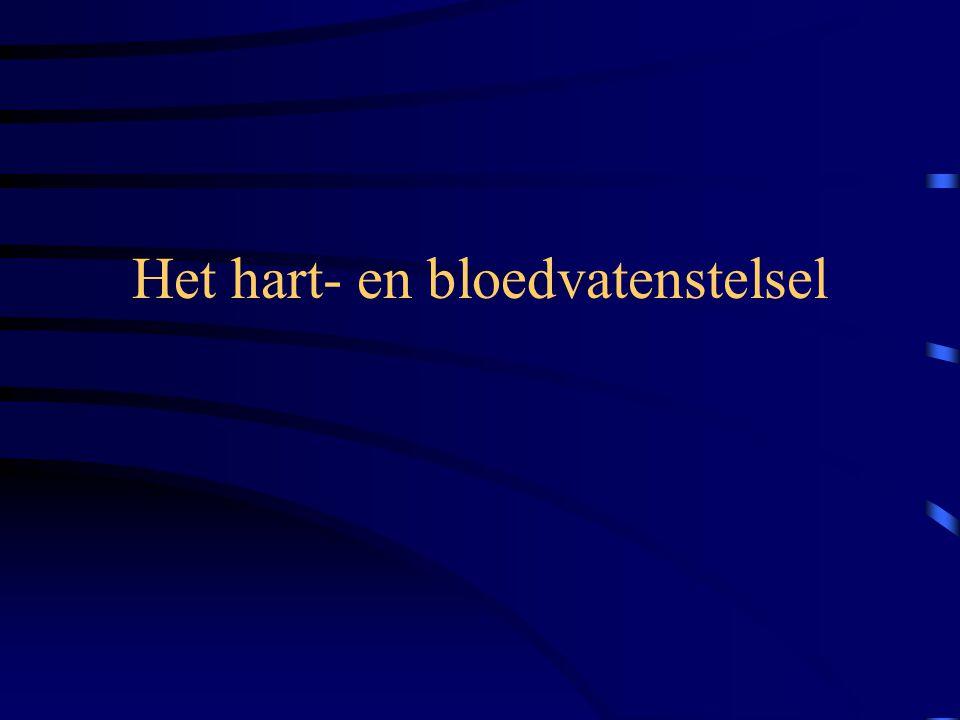 De ambulancier en het belang van de ademhaling •H•Het lichaam kan niet overleven zonder zuurstof. Na 4 tot 6 minuten: begint onherstelbare hersenschad