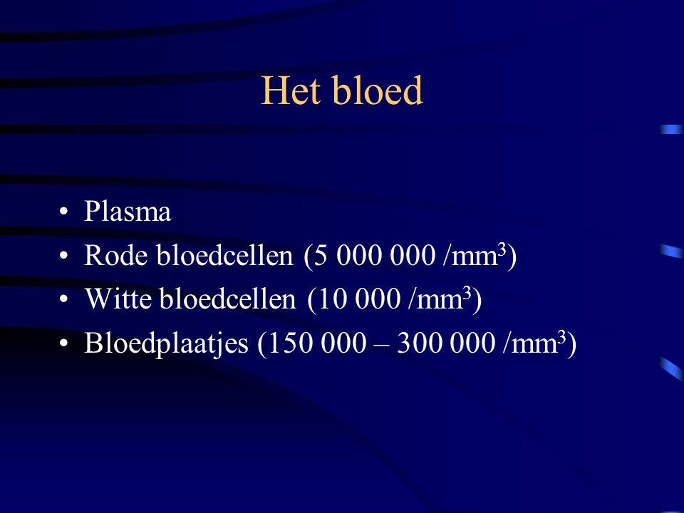De bloedvaten