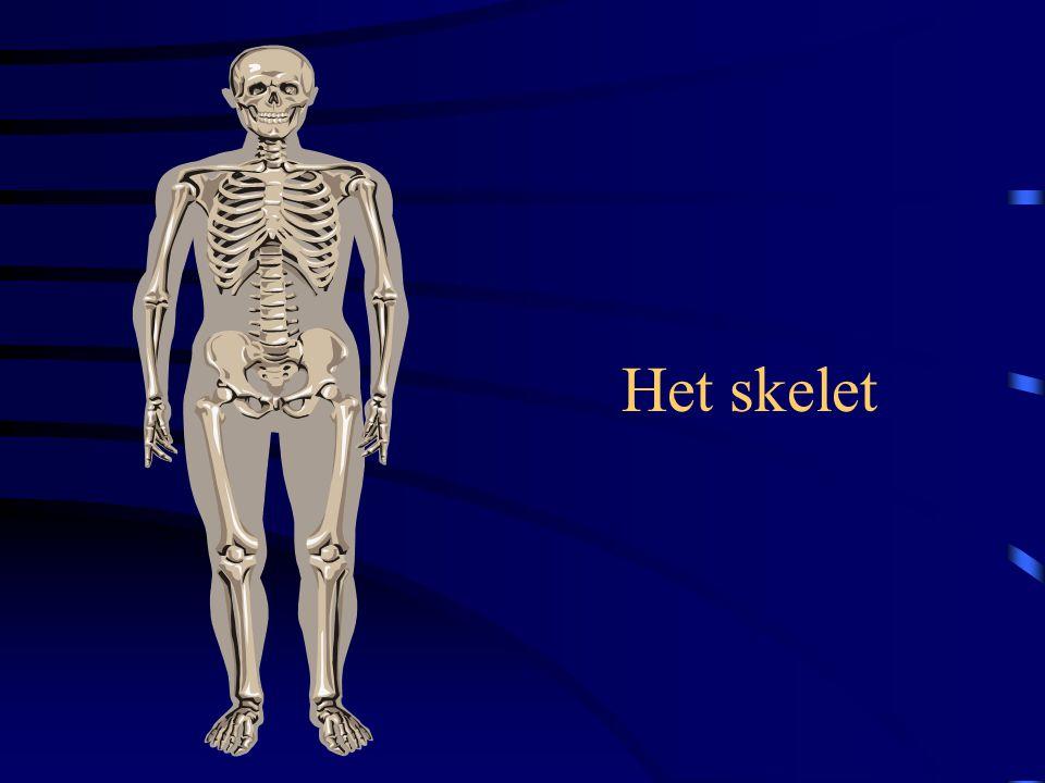 Het bewegingsstelsel Bouw en werking •Functie –steun en vorm geven aan het lichaam –bewegingen mogelijk maken (gewrichten / spieren) –bescherming bela
