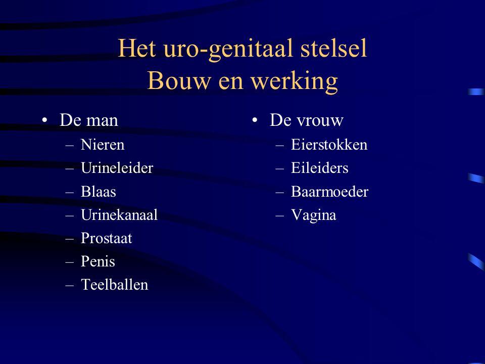 Het uro-genitaal stelsel Uitscheidingsstelsel Voortplantingsstelsel