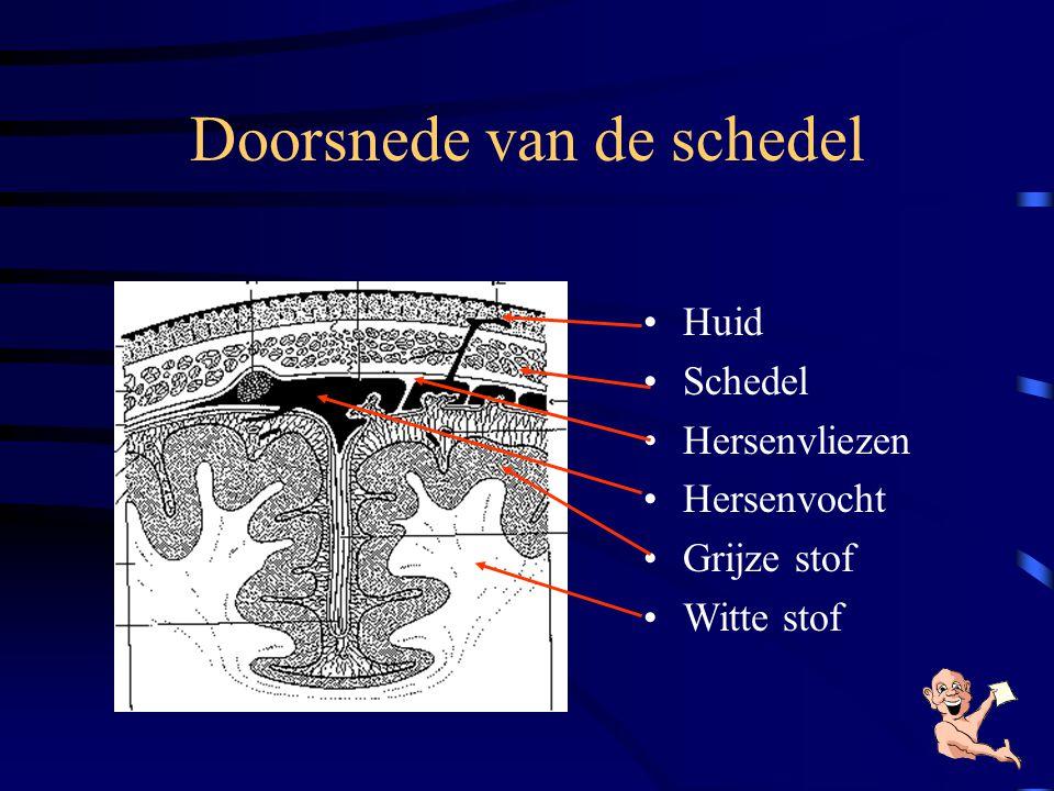Hoe is het zenuwstelsel opgebouwd? •Centrale zenuwstelsel –hersenenhersenen –ruggenmergruggenmerg •Perifere zenuwstelsel –zenuwen