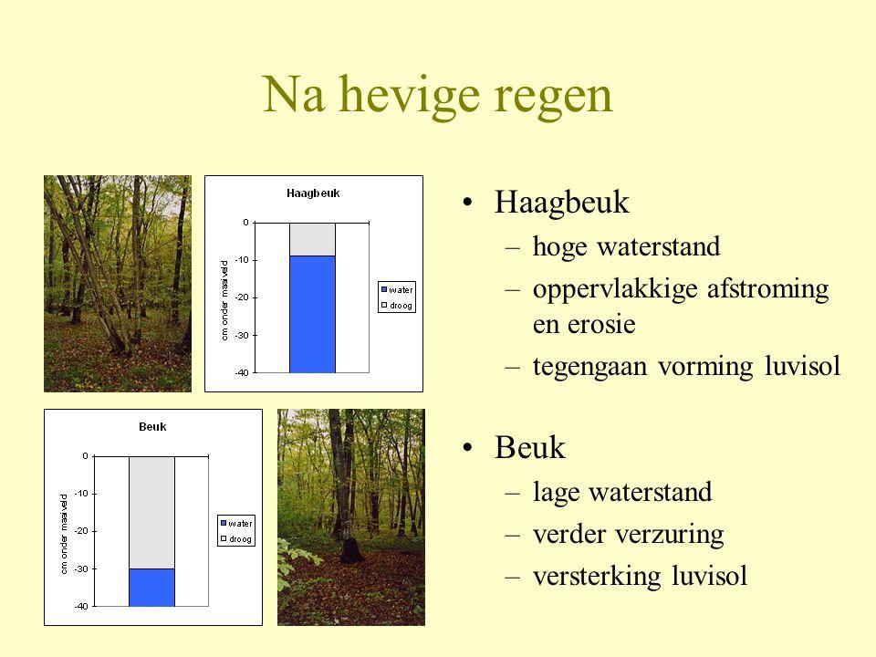 Na hevige regen •Haagbeuk –hoge waterstand –oppervlakkige afstroming en erosie –tegengaan vorming luvisol •Beuk –lage waterstand –verder verzuring –ve