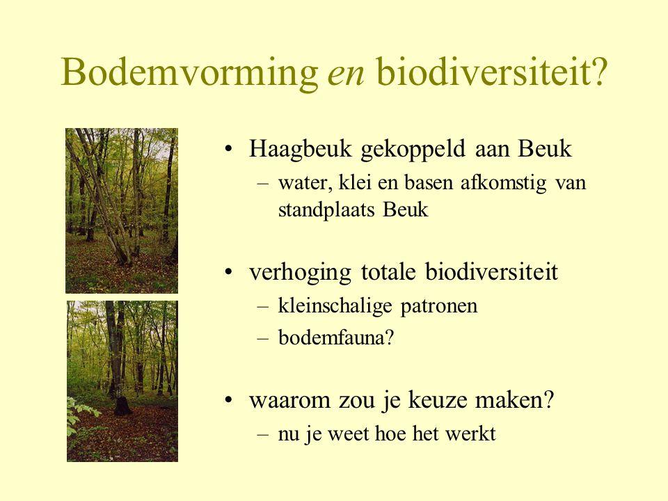 Bodemvorming en biodiversiteit? •Haagbeuk gekoppeld aan Beuk –water, klei en basen afkomstig van standplaats Beuk •verhoging totale biodiversiteit –kl