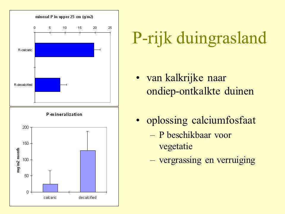 P-rijk duingrasland •van kalkrijke naar ondiep-ontkalkte duinen •oplossing calciumfosfaat –P beschikbaar voor vegetatie –vergrassing en verruiging