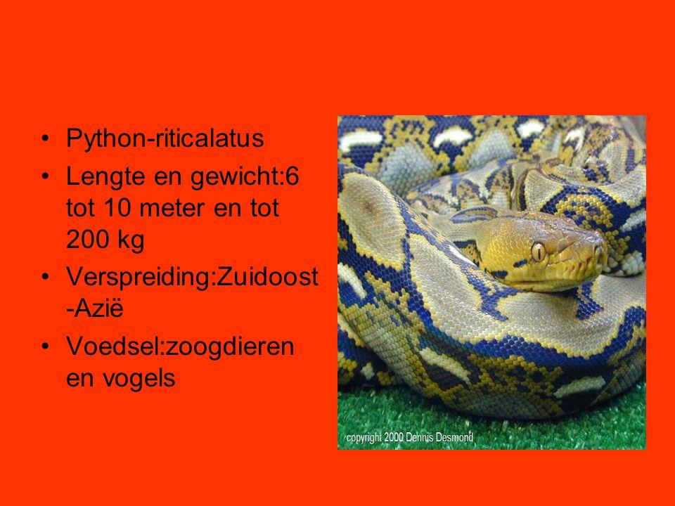 •Python-riticalatus •Lengte en gewicht:6 tot 10 meter en tot 200 kg •Verspreiding:Zuidoost -Azië •Voedsel:zoogdieren en vogels