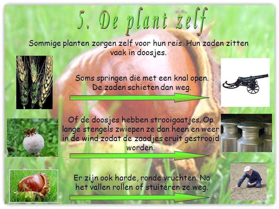 Sommige planten zorgen zelf voor hun reis. Hun zaden zitten vaak in doosjes. Soms springen die met een knal open. De zaden schieten dan weg. Of de doo
