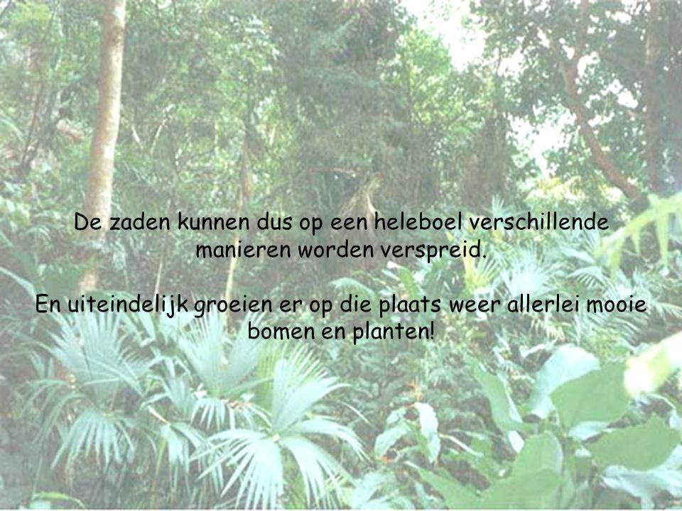 De zaden kunnen dus op een heleboel verschillende manieren worden verspreid. En uiteindelijk groeien er op die plaats weer allerlei mooie bomen en pla