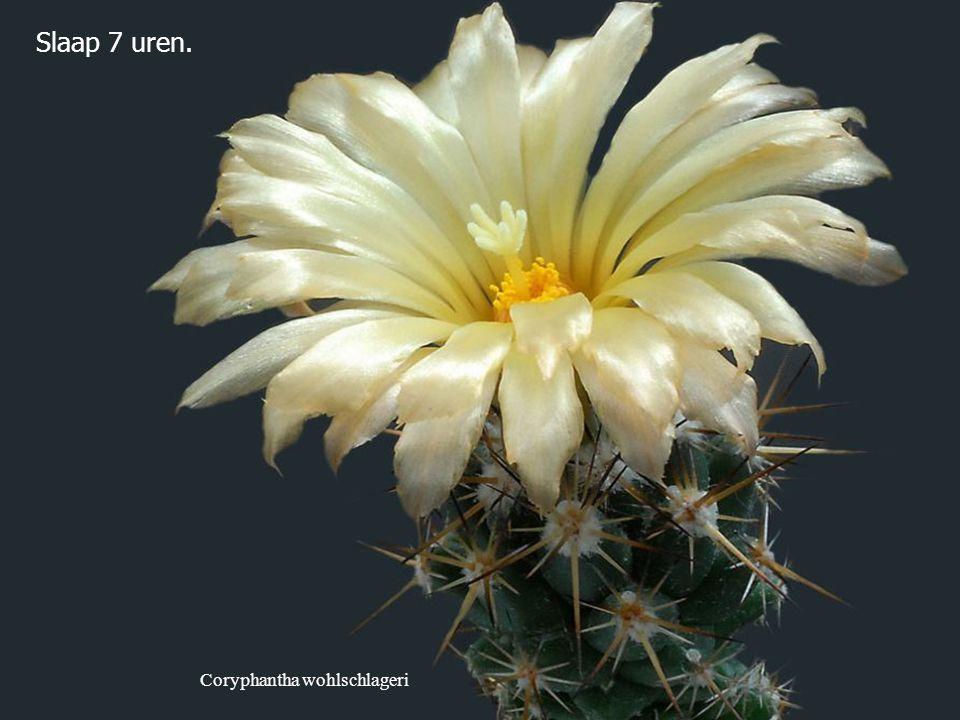 Ferobergia hybride Sluit vrede met jouw verleden, zodat het jouw heden niet bederft.