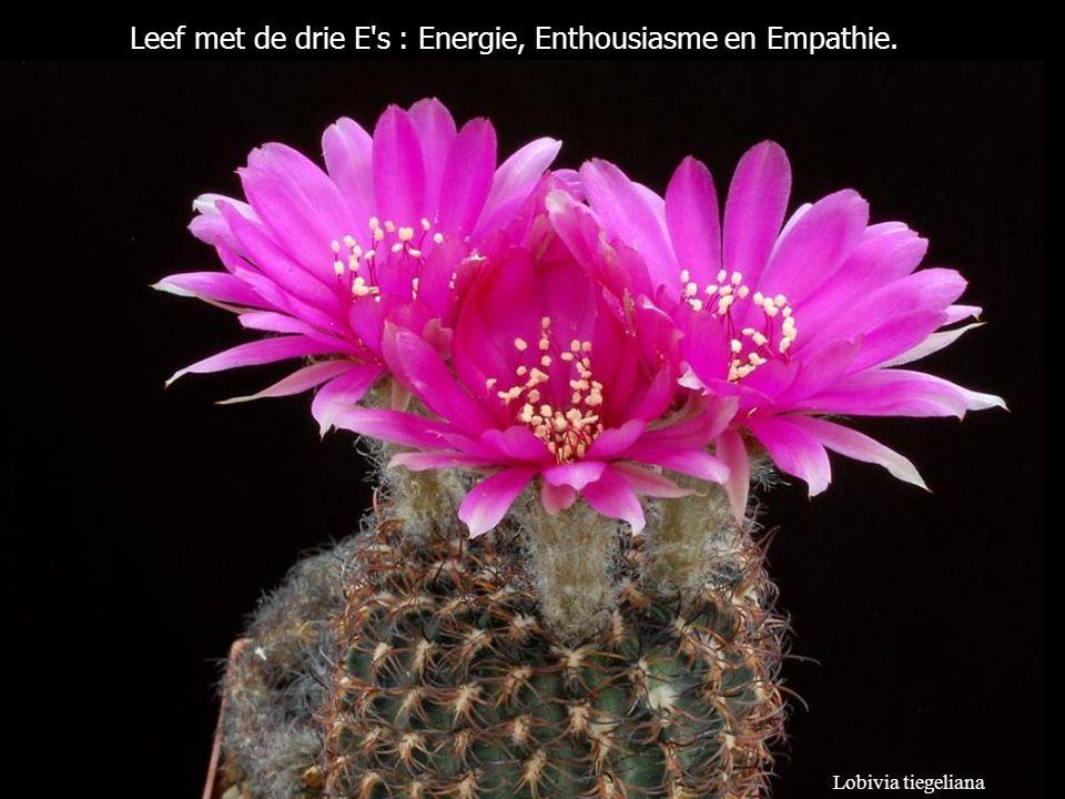 Lobivia tiegeliana Leef met de drie E s : Energie, Enthousiasme en Empathie.