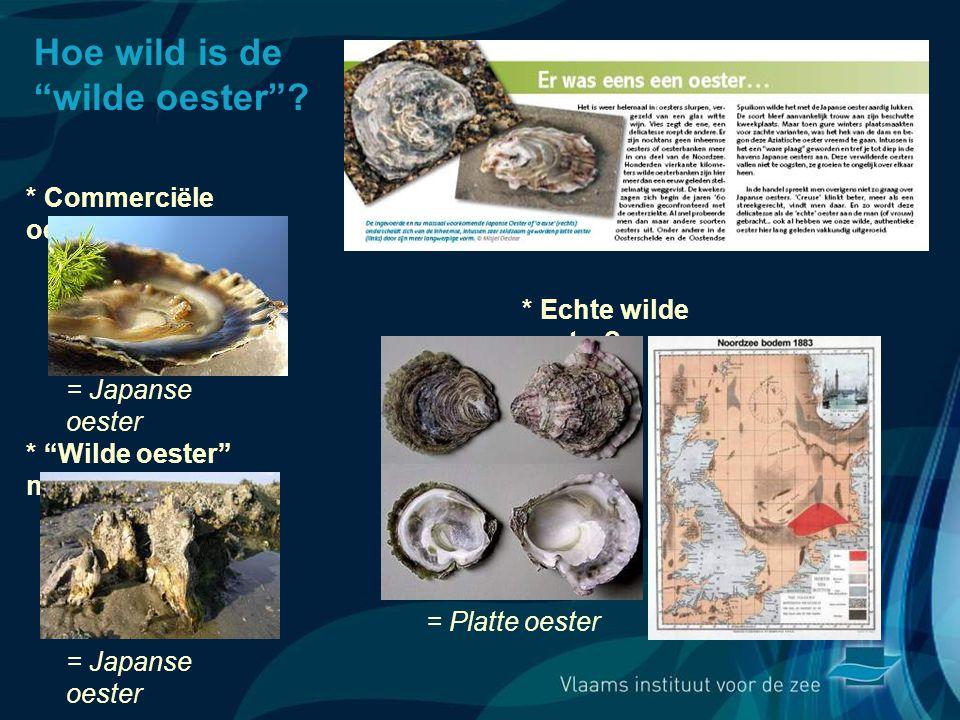 Hoe wild is de wilde oester .* Commerciële oester = Japanse oester * Echte wilde oester.