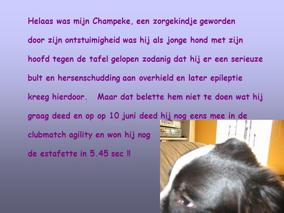 Helaas was mijn Champeke, een zorgekindje geworden door zijn ontstuimigheid was hij als jonge hond met zijn hoofd tegen de tafel gelopen zodanig dat h