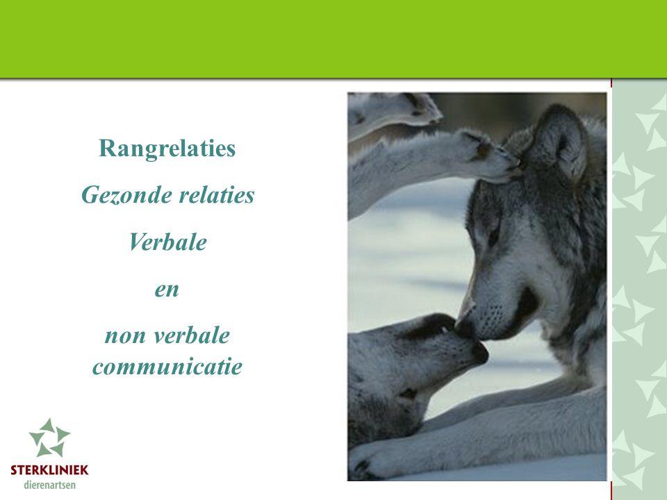 Gezonde relaties Verbale en non verbale communicatie
