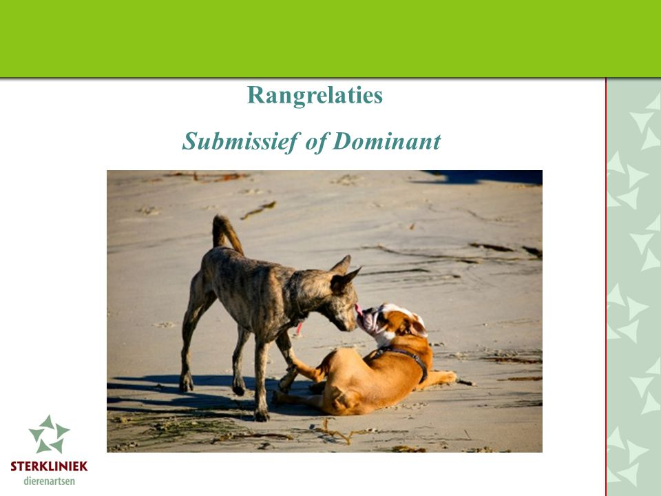 Rangrelaties Submissief of Dominant