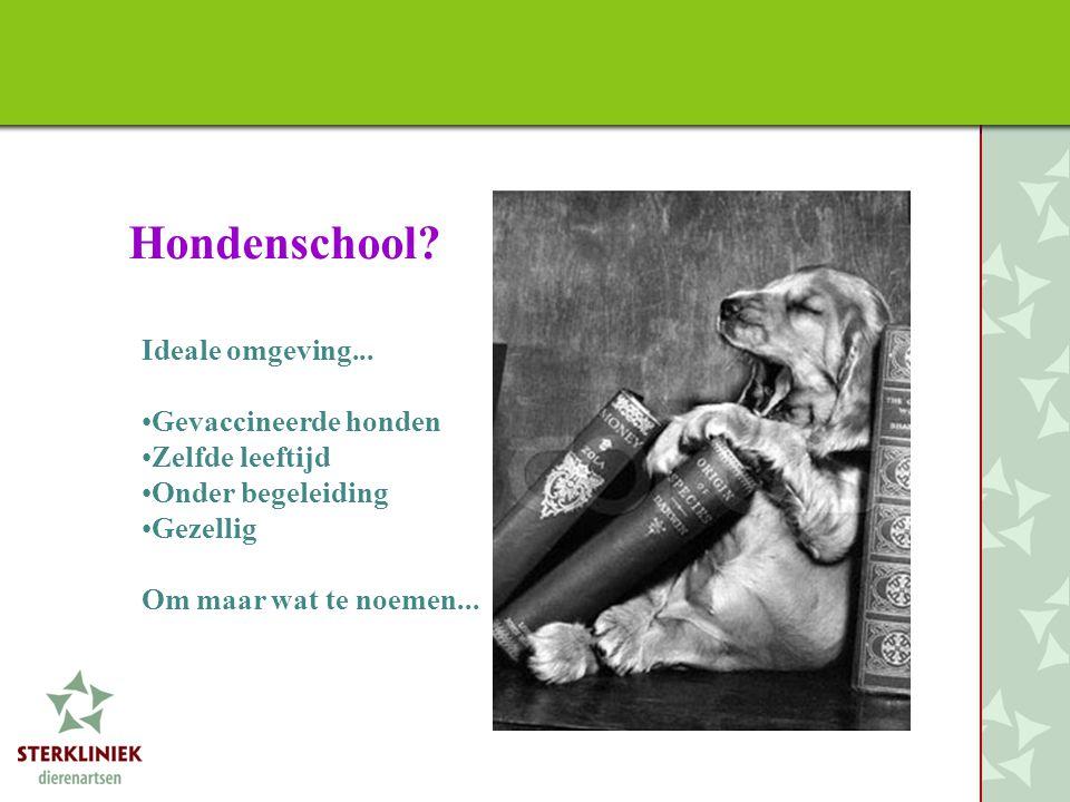 Hondenschool? Ideale omgeving... •Gevaccineerde honden •Zelfde leeftijd •Onder begeleiding •Gezellig Om maar wat te noemen...