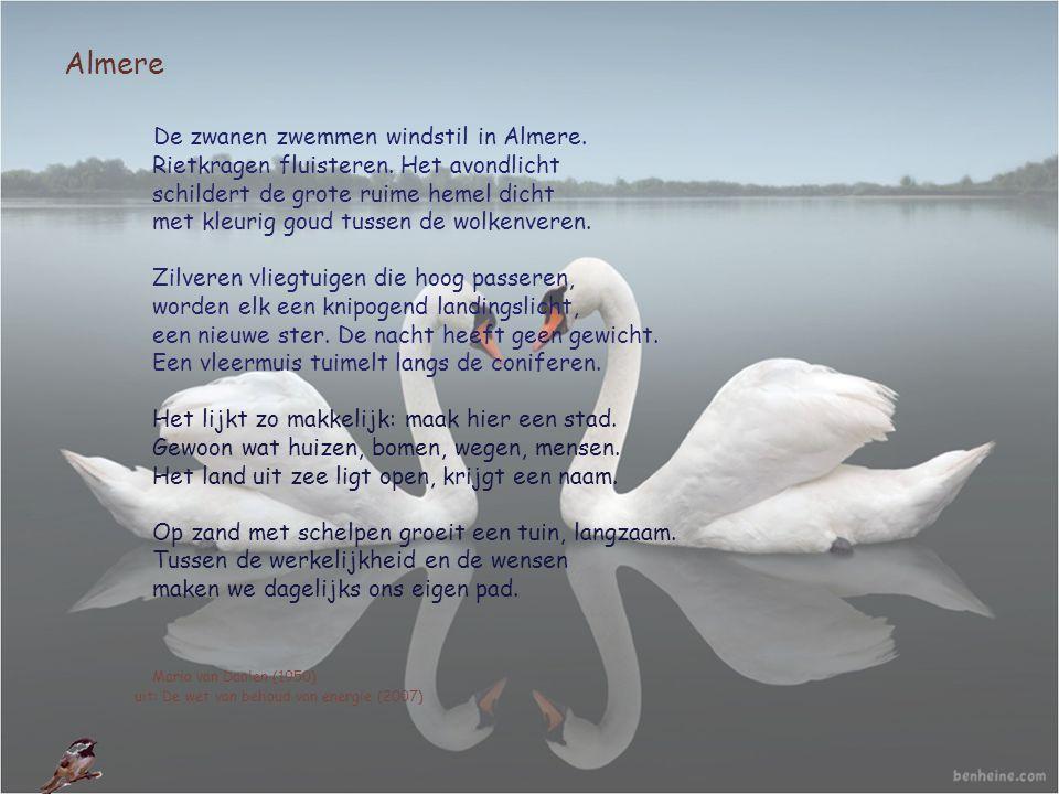 Almere De zwanen zwemmen windstil in Almere. Rietkragen fluisteren. Het avondlicht schildert de grote ruime hemel dicht met kleurig goud tussen de wol